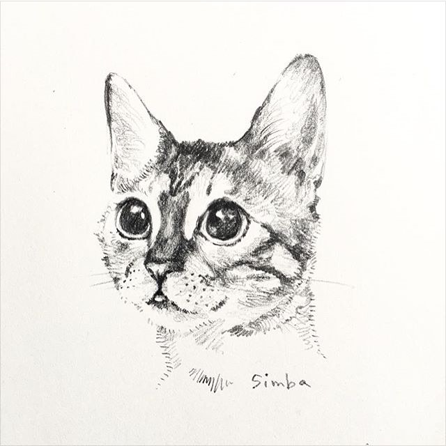 45 Painting Photo Portraits of Bengal Cat Simba Sent for Free