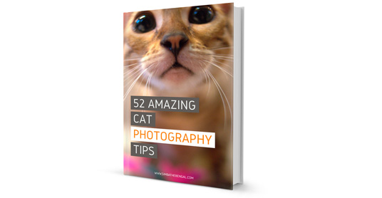 52 cats photography tips