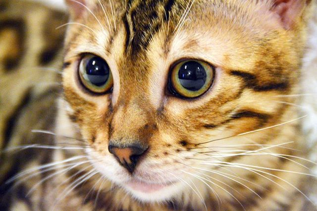 Take a close up portrait - cat photography