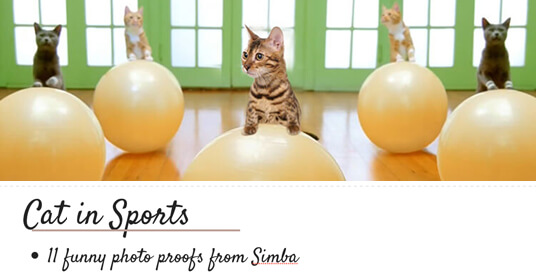 cat in sports simba