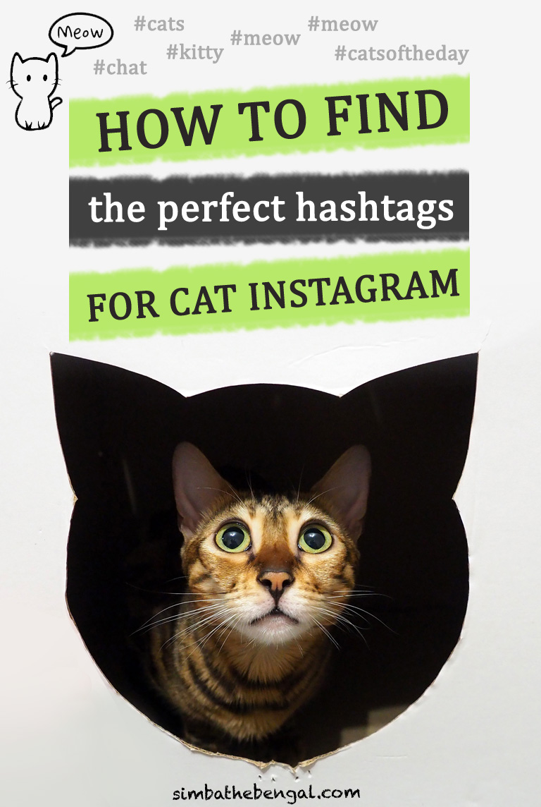 How to Choose Instagram Cat Hashtags [Full Guide with 347 Examples]